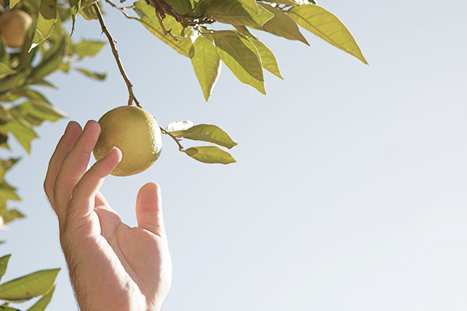 Do Dividend ETFs bare fruit?